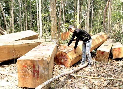 Chuyển rừng giàu thành rừng nghèo ảnh 2