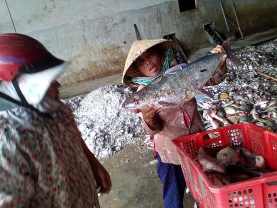 Cá chết miền Trung gây bất lợi nền kinh tế ảnh 1