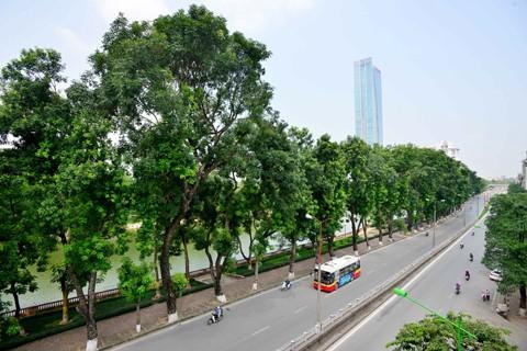 Di dời cây xanh trên đường Kim Mã ảnh 1