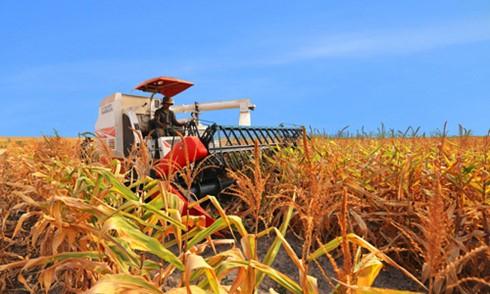 DN đầu tư nông nghiệp vướng rào cản đất đai ảnh 1