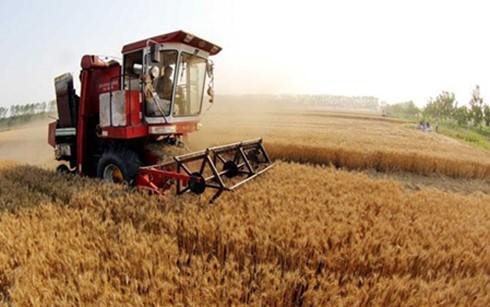 Bài học quý từ phát triển nông nghiệp ảnh 1
