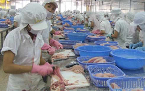 60 cơ sở được phép xuất cá bộ siluriformes sang Mỹ ảnh 1