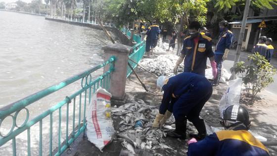 Đã vớt hơn 60 tấn cá chết ở Hồ Tây ảnh 1