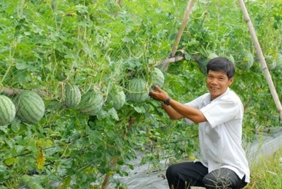 Tìm cách đẩy vốn vào nông nghiệp ảnh 1