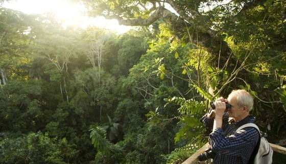 Na Uy tặng 1 tỷ USD giữ rừng Amazon ảnh 1
