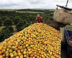 Brazil nhập siêu 3 tỷ USD trong 6 tháng ảnh 1