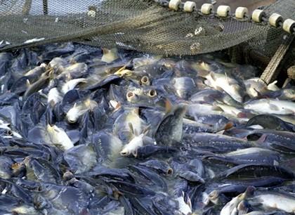 Hoa Kỳ thanh tra, giám sát cá da trơn Việt Nam ảnh 1