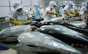 Xuất khẩu cá ngừ hạn chế vì thiếu nguyên liệu ảnh 1