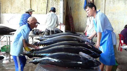 Cá ngừ đại dương Phú Yên có nhãn hiệu tập thể ảnh 1