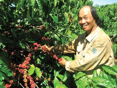 Cứu doanh nghiệp xuất khẩu cà phê ảnh 1