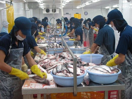 Cơ hội tái cơ cấu cá tra Việt Nam ảnh 1