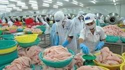 Cảnh báo kháng sinh cấm trong cá tra xuất khẩu ảnh 1
