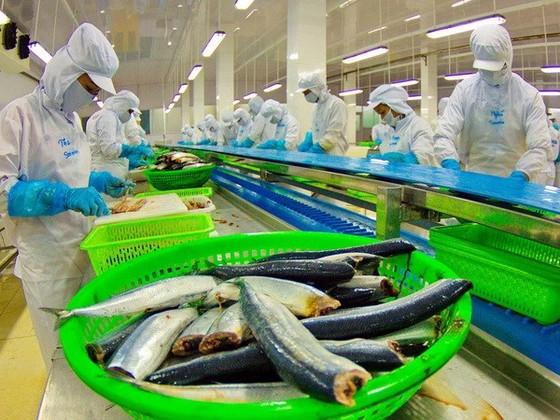 Nhiều giải pháp nâng giá trị cá tra Việt Nam ảnh 1