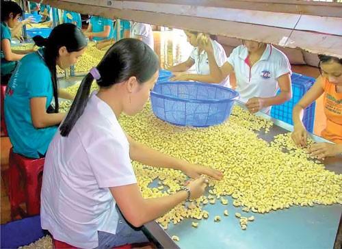 Cho vay xuất khẩu nông, thủy sản: Hết cửa ưu tiên ảnh 1