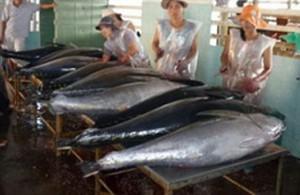 Xây dựng thương hiệu cá ngừ Phú Yên ảnh 1