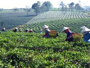 Nông nghiệp Việt Nam có thể tạo ra giá thế giới? ảnh 1