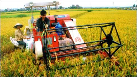 Đảm bảo lợi ích cho nông dân ảnh 1