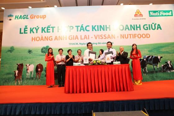 3 DN lớn hợp tác kinh doanh bò sữa, bò thịt ảnh 1