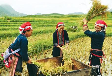 """Thi ảnh báo chí """"Nông nghiệp-nông dân-nông thôn"""" ảnh 1"""
