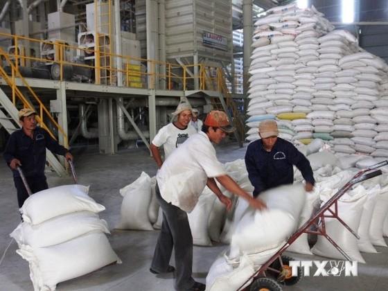 Tìm hướng tái cơ cấu ngành hàng lúa gạo ảnh 1