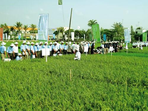 Sản xuất lúa gạo công nghệ cao ảnh 5