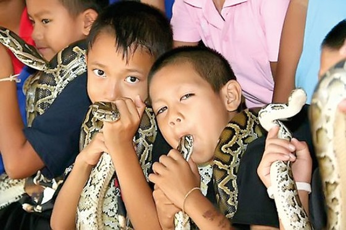 Năm rắn nói chuyện lạ về rắn ảnh 5