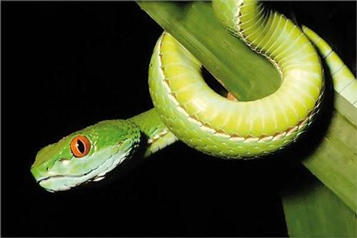 Năm rắn nói chuyện lạ về rắn ảnh 7