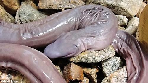 Năm rắn nói chuyện lạ về rắn ảnh 3