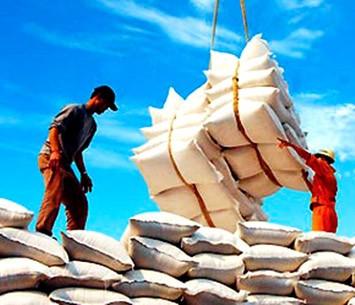 Xem xét DN đủ điều kiện xuất khẩu gạo ảnh 1