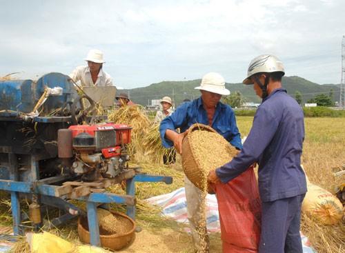 Mua tạm trữ 500.000-1 triệu tấn lúa ảnh 1