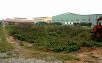 Hà Nội xử lý dứt điểm vi phạm hoang hóa đất ảnh 1