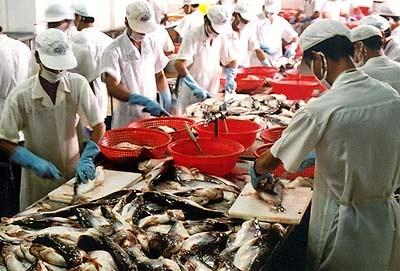 Vay 12.000 tỷ đồng nuôi, chế biến cá tra ảnh 1
