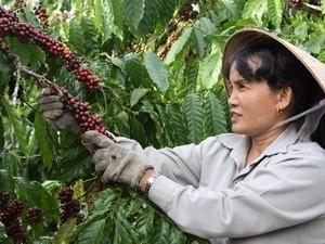 Nông nghiệp: Mục tiêu tăng trưởng XK 8-10%/năm ảnh 1