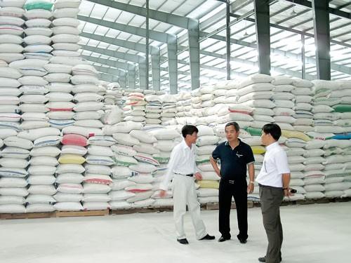 Siết doanh nghiệp xuất khẩu gạo ảnh 1