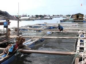 Quy hoạch nuôi cá biển đến năm 2015 ảnh 1