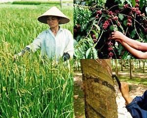Điều chỉnh giảm dự báo nông sản xuất khẩu ảnh 1
