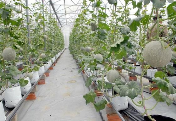 Việt Nam sẽ có 10 khu nông nghiệp công nghệ cao ảnh 1