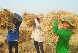 Bẫy nghèo và 4 bước của nông dân ảnh 1