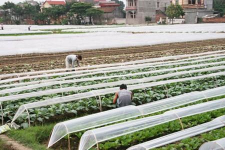 Con đường bền vững nhất cho nông nghiệp ảnh 1