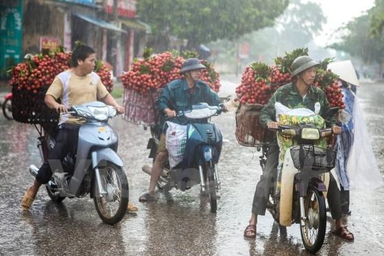 Nông sản Việt hội nhập: Tái cơ cấu, hướng tới xuất khẩu ảnh 1