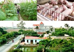Huy động 41.000 tỷ đồng xây dựng Nông thôn mới ảnh 1