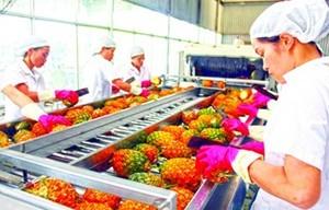 Xuất khẩu rau quả: Điểm sáng quý I ảnh 1