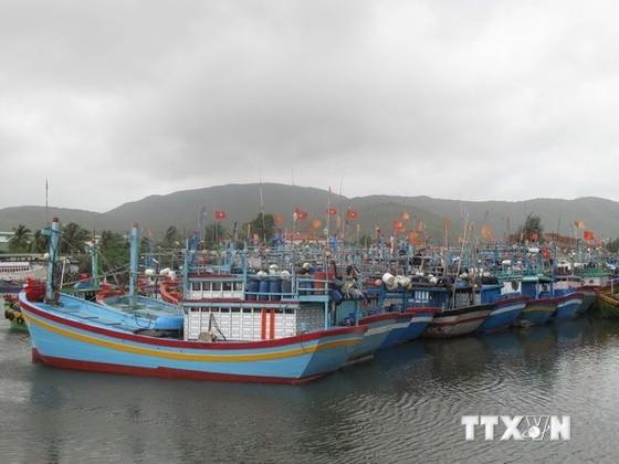 Triển khai nghị định chính sách phát triển thủy sản ảnh 1