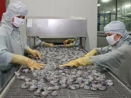 30% lô tôm xuất sang Nhật bỏ kiểm tra ethoxyquin ảnh 1
