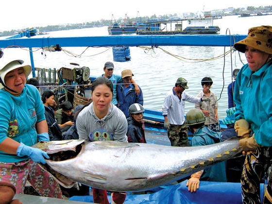 Tăng giá trị cá ngừ đại dương ảnh 1