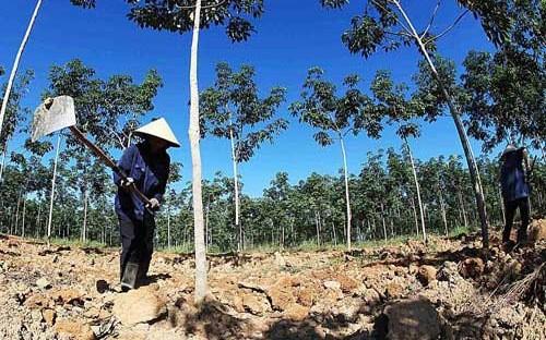 Thí điểm cho nông dân góp vốn bằng đất ảnh 1