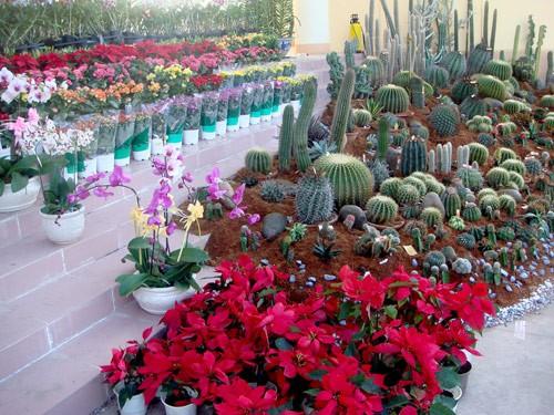 Tối nay khai mạc Hội hoa xuân 2012 ảnh 1