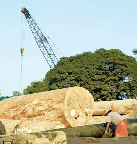 Trung Quốc: Hậu trường đầu tư nước ngoài (K1): Đánh sập núi tìm ngọc ảnh 1