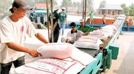 Trúng thầu 800.000 tấn gạo cho Philippines: Hớ đậm! ảnh 1