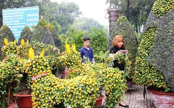 Người dân TPHCM tất bật lựa hoa kiểng đón Tết ảnh 2